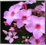 Pink Flowers 1 Fine-Art Print
