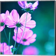 Pink Flowers 2 Fine-Art Print