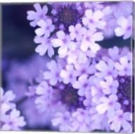 Purple Flowers 2 Fine-Art Print
