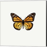 Yellow Butterfly 1 Fine-Art Print