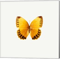 Yellow Butterfly 2 Fine-Art Print
