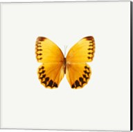 Yellow Butterfly 2 Fine-Art Print