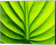 Green Design 2 Fine-Art Print