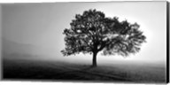 Tree in Mist Fine-Art Print