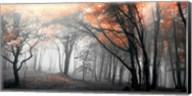 Autumn Woods 1 Fine-Art Print