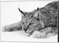 Lynx Fine-Art Print