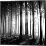 Wood Light Fine-Art Print