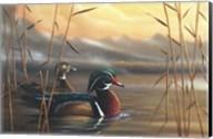 Wood Ducks Fine-Art Print