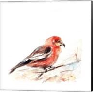 Red Breasted III Fine-Art Print