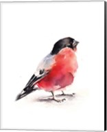 Red Breasted Fine-Art Print