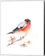 Red Breasted II Fine-Art Print
