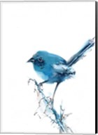 Blue Bird Fine-Art Print