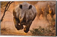 Rhino Learning To Fly Fine-Art Print