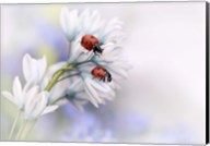 Ladybirds Fine-Art Print