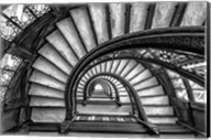 The Rookery Fine-Art Print