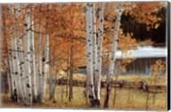 Birch Beauty Fine-Art Print