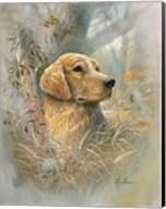 Golden Beauty Fine-Art Print