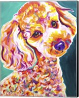 Poodle - Curly Fine-Art Print