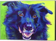 Border Collie - Viktor Fine-Art Print