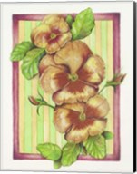 Pansies Fine-Art Print