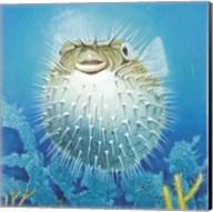 Puffer Fish Fine-Art Print