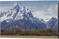 A Horse In Front Of The Grand Teton Fine-Art Print
