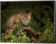 Bobcat Kitten Poses On Log Fine-Art Print