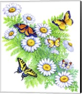 Daisies and Butterflies Fine-Art Print