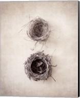 Nest IV Fine-Art Print