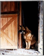 Red Dog's Barn Fine-Art Print