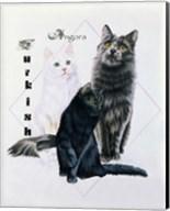 Turkish Angora Fine-Art Print