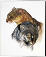 Jaguarundi Fine-Art Print