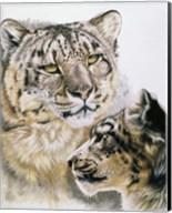 Panthera Uncia Fine-Art Print