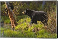 Black Bear Fine-Art Print