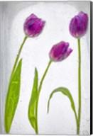 Flores Congeladas 2 Fine-Art Print