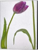 Flores Congeladas 3 Fine-Art Print