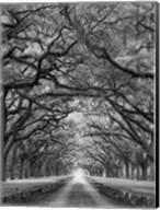 Oaks Avenue 2 BW Fine-Art Print