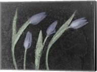 Tulipanes Azules Fine-Art Print