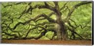 Tree Of Light Color FL Fine-Art Print