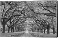 Oaks Avenue 1 BW Fine-Art Print