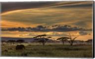 Africa Fine-Art Print