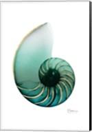 Shimmering Snail 4 Fine-Art Print