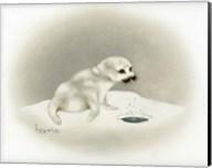 Seal Fine-Art Print