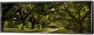 Southern Canopy Fine-Art Print