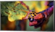 Ladybird Fine-Art Print