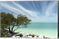 Key West Tree 1 Fine-Art Print