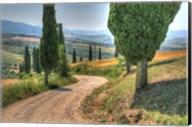 Tuscan Footpath 0392 Fine-Art Print