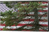Pine Flag Barn Fine-Art Print