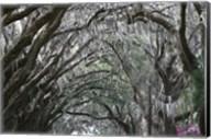 Spainish Moss Live Oak Arch Fine-Art Print