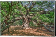 Angel Oak Fine-Art Print